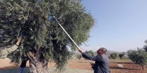 Organik zeytinyağı üretimi kısa filmle anlatıldı