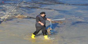 Gölette tilki kurtarma operasyonu