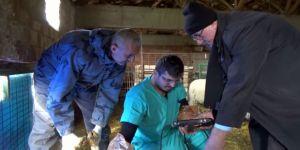 Koyunlara ultrasonlu gebelik kontrolü
