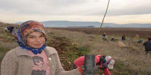 Yanan ağaçlandırma sahasına yenilik