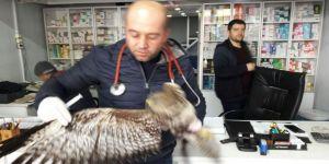 Yaralı olarak bulunan puhu kuşu tedavi altına alındı