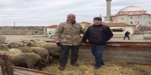 Günyüzülü genç çiftçilere koyunları teslim edildi