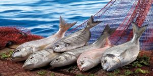 Dünya devleri Türk balığını hava kargo ile taşımak için yarışıyor