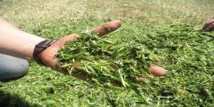İzmitli çiftçilere tohum desteği verilecek