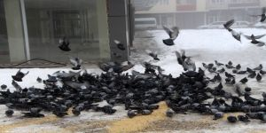 Güvercinlere esnaf sahip çıktı