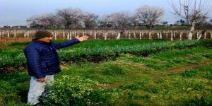 'Yalancı Bahar' çiftçileri endişelendiriyor