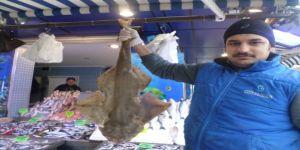Balıkçı ağlarına köpekbalığı takıldı