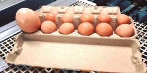 Tavuk yumurtasının içinden çıkana inanamadı!