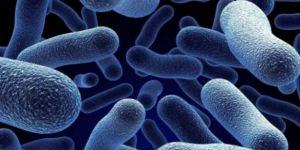 Yerli ve millî bakteri ekonomiye katkı sağlayacak
