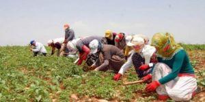 Tarım işçisinin günlük ücreti arttı