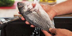 Ege balıkları Amerika pazarında ilgi odağı oldu