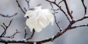 Bahar dallarına kar yağdı