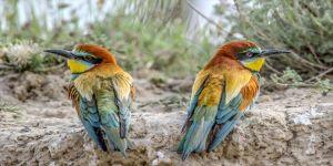 Kuş türü sayısında sevindirici haber