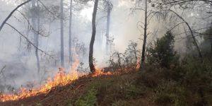 1 hektarlık orman kül oldu