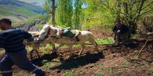 İlkel yöntemlerle tarım