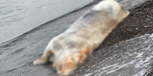 Ayakları Bağlı Şekilde Sahile Ölüsü Vurdu