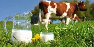 Toplanan inek sütü miktarı yüzde 17,5 arttı