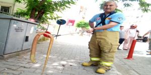 Şehrin merkezinde 'oluklu kertenkele' yakalandı