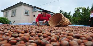 4 ayda 6 bin 615 ton fındık ihraç edildi