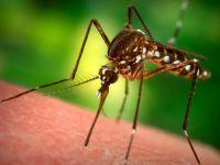 Sivrisinekten Korunması Gereken Kişiler ve Doğal Yöntemler !