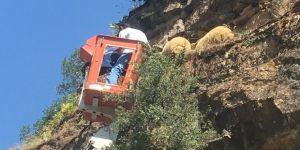 Koyun kurtarma operasyonu