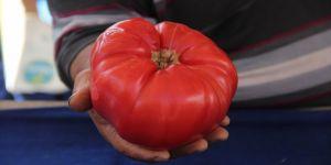 Bu domatesler tam 1 kilo 200 gram
