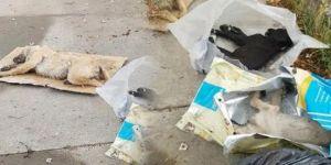 5 yavru köpek ölü bulundu