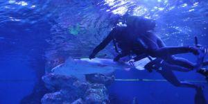 Köpek balığı bayıltılarak muayene edildi