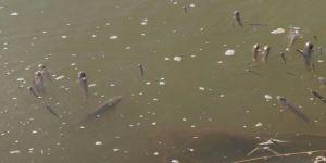 Toplu balık ölümlerini nedeni