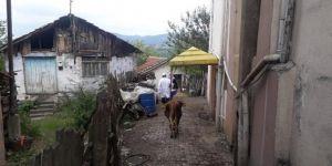Kocaeli'de şarbon karantinasına alınan köyde aşılama başlatıldı