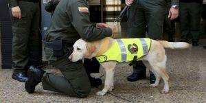 Polis köpeğinin başına para ödülü koydular