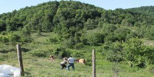 Çalınan inekler ahıra 500 metre uzaklıkta bulundu