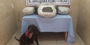 Trendeki 26 kilo esrarı narkotik köpekleri buldu