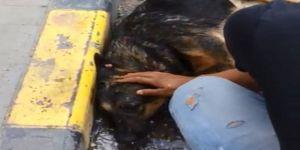 Sıcaktan bayılan köpek suyla hayata döndü
