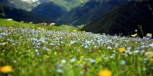 Petran Yaylası çiçeklerle rengarenk