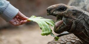 Dev kaplumbağaların yuvası
