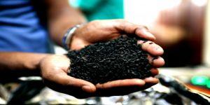 Dünyada çayın merkezi: Sri Lanka