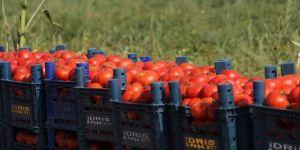 Fırsatçılar domatese de 'salça' oldu