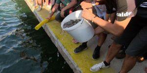 35 bin levrek yavrusu denizle buluştu