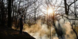 Yangınında 70 hektar alan zarar gördü