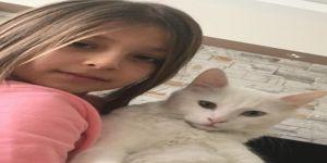 Minik Zeynep, kaybolan kedisini her yerde arıyor