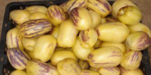 Pepino meyvesinin faydası nelerdir?