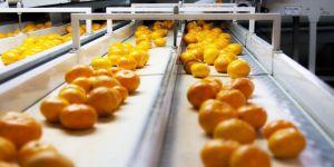 Rusya'ya yaş meyve sebze ihracatı 410 milyon doları aştı