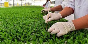 Hükümlüler yerli tohumla üretecek