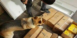 Bal tenekelerinden 176 kilo eroin ele geçirildi