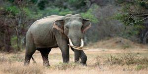 Fillerin intikamı!
