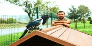 Saksağan Alex Başakşehir'i çok sevdi