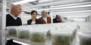Bitkiler bu laboratuvarda filizleniyor
