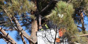 Kozalak toplayan adam elektrik akımına kapılarak öldü