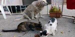 Anneleri telef olan kedilere, köpek sahip çıktı